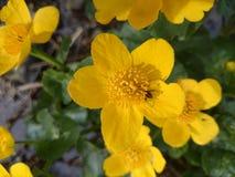 litet fel som döljas i en blomma Royaltyfri Fotografi