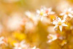 Litet fjädra blomman royaltyfri foto