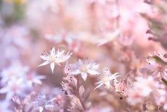 Litet fjädra blommor fotografering för bildbyråer