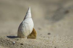 Litet flodskal på den sandiga kusten Arkivbilder