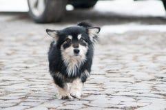 Litet gå för hund royaltyfria foton