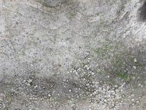 Litet gräs som växer upp på yttersidan av att knäcka den konkreta vägen fotografering för bildbyråer