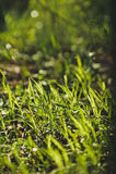 Litet grönt gräs Royaltyfri Fotografi