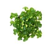 Litet grönt organiskt träd Arkivfoto