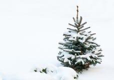 Litet granträd som täckas med snö Fotografering för Bildbyråer