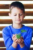 Litet gulligt barn som rymmer den gröna växten i händer royaltyfri foto