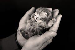 Litet gulligt behandla som ett barn kattungen royaltyfria bilder