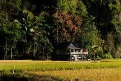 Litet hus i risfältfält Arkivfoton