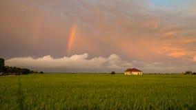 Litet hus i risfältfält Fotografering för Bildbyråer