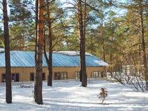 Litet hus i vinterskog i solig dag Royaltyfri Bild