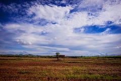 Litet hus på fältet Fotografering för Bildbyråer