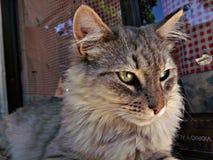 Litet husdjur Fotografering för Bildbyråer