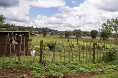 Litet jordbruksföretag, Nandi Hills, Kenya Arkivbilder