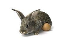 Litet kanin och ägg Fotografering för Bildbyråer