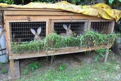 Litet kaninlantbruk Matande kaniner Kaninbur Royaltyfri Bild