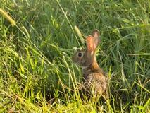 Litet kaninnederlag i gräs royaltyfri foto