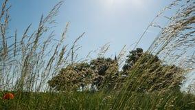 Litet kapell bak träden och gräset Fotografering för Bildbyråer