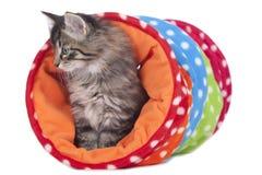 Litet kattungesammanträde i en leksaktunnel royaltyfria bilder