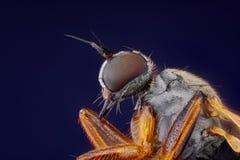 litet klipskt huvud som tas med mikroskopmålet   Fotografering för Bildbyråer