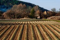 Litet lavanderfält i Provence, Frankrike Fotografering för Bildbyråer