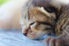 Litet ligga för kattungetigermodell Arkivbilder