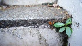 Litet liv av den lilla växten Fotografering för Bildbyråer
