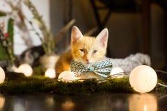 Litet ljust rödbrun kattungeband en fluga royaltyfria foton