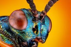 litet metalliskt getinghuvud som tas med mikroskopmålet   Royaltyfri Fotografi