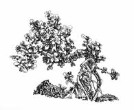 Litet pengarträd, benägen bonsai Arkivfoto