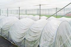 Litet plast- växthus arkivbilder