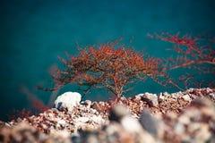 Litet rött träd som växer på sjömjödrekreationsområde, USA Arkivfoton