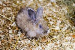 Litet rött kaninsammanträde på sugrör Fotografering för Bildbyråer