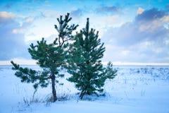 Litet sörja träd på den Östersjön kusten under molnigt royaltyfri fotografi