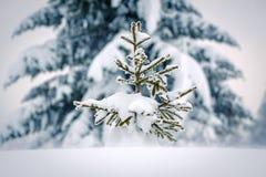 Litet sörja trädet Royaltyfria Foton