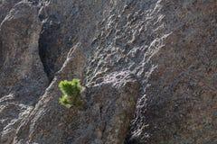 Litet sörja trädet i vaggar royaltyfri fotografi