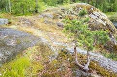 Litet sörja trädet och grönt gräs royaltyfria bilder
