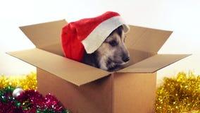 Litet sammanträde för valphund i en kartong med garneringar för jul och för nytt år Arkivfoto