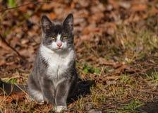 litet se för katt Arkivfoton