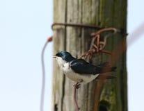 Litet sjunga för fågel Arkivfoton