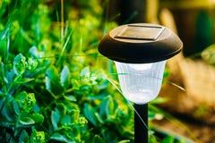 Litet sol- trädgårds- ljus, lykta i rabatt trädgårds- trädgårdar hamilton New Zealand för design arkivfoton