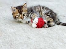 Litet spela för kattunge Arkivbilder