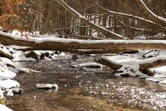 Strömma i skogen Arkivbild