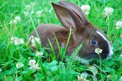 Litet svartvitt kaninsammanträde på gräset. Royaltyfria Bilder