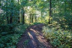 Litet tänd väg i skogen arkivbilder