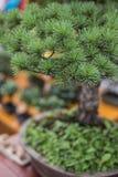 Litet taggigt dekorativt träd royaltyfri fotografi