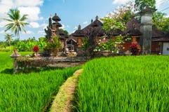 Litet tempel på riceterrassen, Bali, Indonesien Arkivfoton