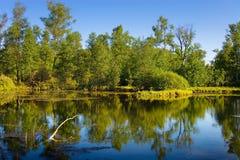 litet trä för lake royaltyfria foton