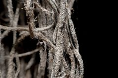 Litet trä rotar på en svart bakgrund arkivfoto