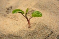 Litet träd Fotografering för Bildbyråer