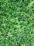 Litet träd, Fukien te Arkivfoton
